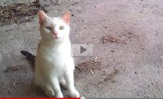Minki the Cat Stray No More! This Will Touch Your Heart! - Love Meow