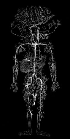 Nervous System Anatomy, Human Nervous System, Nerve Anatomy, Human Body Anatomy, Anatomy Drawing, Anatomy Art, Shoulder Muscle Anatomy, Systems Art, Human Body Systems