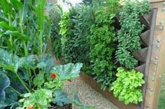 Ideas for Small Gardens - Growing Vegetables Vertically, another great read from growveg.com