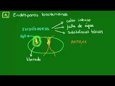 Endósporos bacterianos - Diversidade dos Seres Vivos - Biologia - YouTube