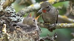 Hummingbird live webcam takes flight in B.C.