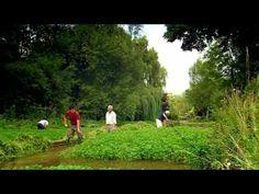 Watercress-How To Grow It - Veggie Garden Zone