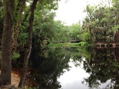 Blackwater Creek in Seminole State Forest is a 19-mile long riverine in Eustis, Florida. The launch point in Seminole State Forest makes for an easy way to access the river for canoeing, kayaking, and SUP.
