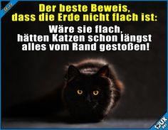 Nur noch Katzen wären übrig! #Katzenliebe