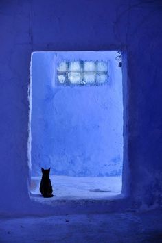 Chefchaouen, Morocco Love the composition of the photo and the color--like a lighter Yves Klein blue Le Grand Bleu, Bleu Indigo, Jolie Photo, Love Blue, Black And Blue, Color Blue, Blue Aesthetic, Something Blue, Crazy Cats