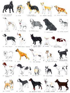 David Sparshott 01 - dogs
