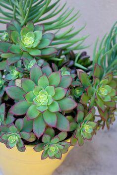 Arranjo com Cactos...like the yellow www.casitassayuita.com