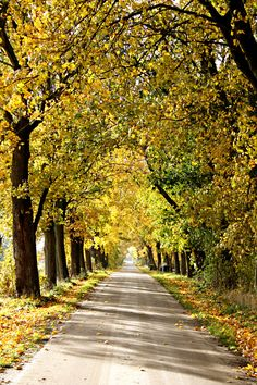 Autumn in Germany can be so beautiful (S-H Brokenlande)