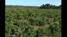 sul da bahia 100 hectares em Itamaraju, Bahia - YouTube