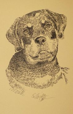 Rottweiler dog art Portrait Print #54 Kline adds dog name free. Drawn from words | eBay