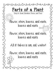 Parts of a Flower Song (Sung to Head, Shoulders, Knees, and toes):