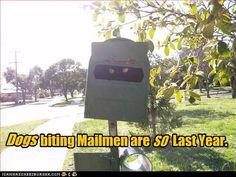 Dogs biting Mailmen are SO last year. LOL! Ninja cat!