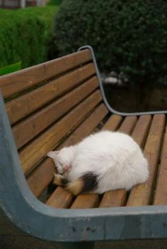 Z(-.-)Zzz・・・・ awesome coloring, white with that tail!