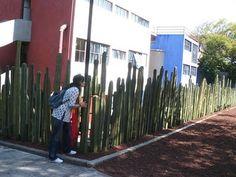 En la casa puente de Diego y Frida
