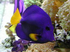 SaltWater Fish 1