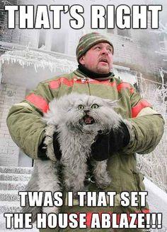 Top 30 Funny cat Memes #Funny Memes