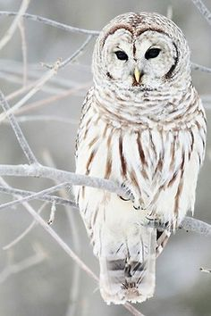 winter's bird..