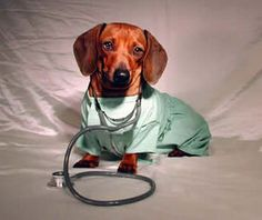 Dachshund love can cure what ails you.