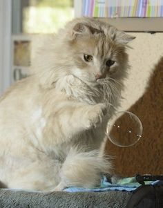 Everybody loves bubbles - I have been using bubbles, tiny ones as a toy for my cat that does not care for normal cat toys.