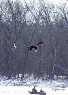 Eagle Bettendorf, Iowa by JKleeman, via Flickr