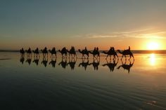 Camels at Cable Beach, Broome, Western Australia