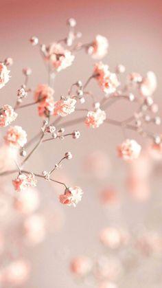 Frühling Wallpaper, Spring Wallpaper, Flower Background Wallpaper, Flower Phone Wallpaper, Cute Wallpaper Backgrounds, Flower Backgrounds, Wallpaper Wedding, Phone Backgrounds, Beautiful Wallpapers For Iphone