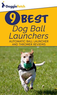 Can't play #fetch with your #dog? Let one of these do it for you! Click here to learn more!