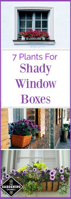 Shady window box plants.  Not everyone has a large garden, but you can make a big impact with a window box.  Try these shade tolerant flowers.