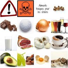 Savez vous qu'il y a des aliments interdit pour les chiens ? Certains moins dangereux que d'autres, mais quoiqu'il en soit, évitez de leur en donner :-) En voici quelques-uns, les plus importants. ...