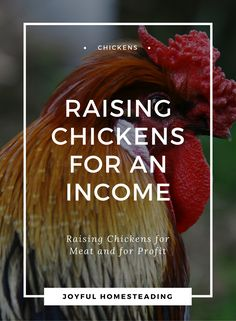 Chicken farming is a good way to live off the land while pursuing self-reliant living.