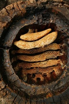 Researchers at the University of Bristol detected chemical 'fingerprints' of beeswax at multiple Neolithic sites across Europe, including on ancient shards of pottery. Bee Swarm, I Love Bees, Bees And Wasps, Stone Age, Save The Bees, Jolie Photo, Bee Happy, Bees Knees, Bee Keeping