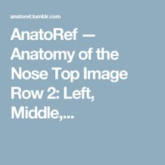 AnatoRef — Anatomy of the Nose Top Image Row 2: Left, Middle,...