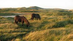 Sable Island, Canada's newest National Park