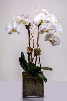 #orchids #white #starbright #starbrightnyc Orchid Plants, Orchids, Glass Vase, Bright, Home Decor, Decoration Home, Room Decor, Home Interior Design, Home Decoration
