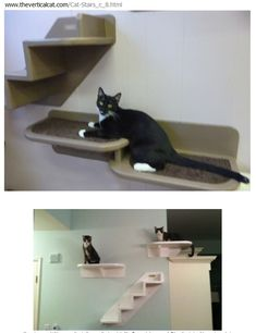Cat shelfs Cat Climber, Ladder Shelf Diy, Cat Heaven, Cat Perch, Fancy Cats, Cat Trees, Cat Playground, Cat Enclosure, Cat Room