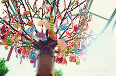 I would LOVE to try this candy tree at some event.it looks like fun! And a good way to creatively give out party favors! Lollipop Birthday, Lollipop Tree, Wonka Chocolate, Chocolate Party, Candy Centerpieces, Candy Decorations, Candy Party, Party Favors, Charlie Chocolate Factory
