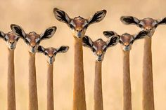 antilopes este africa