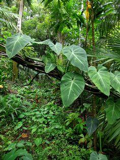 Tropical Forest, Tropical Garden, Tropical Plants, Rainforest Habitat, Forest Mural, Landscape Model, Forest Plants, Terrarium Plants, Forest Photography