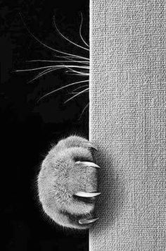 cat photography A cat whos always hissing and scratching at you might actually just be really scared. Animals And Pets, Funny Animals, Cute Animals, Animals Images, Crazy Cat Lady, Crazy Cats, I Love Cats, Cool Cats, Beautiful Cats