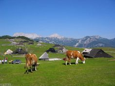 Velika Planina - Beautiful plateau