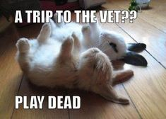Inspirational+Animal+Pictures+with+Captions | Few Funny Animal Pictures To Put A Smile On Your Face - Ned Hardy ...