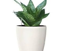 This time instead of buying expensive show piece for your office, hire plants to boost the production and more peaceful atmosphere. At the Foliage Indoor Plant you will get plethora of choice in plants, pots. We can help you with the instalment and maintenance of these green beauties.