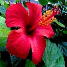 Fotos De Flores Bellas