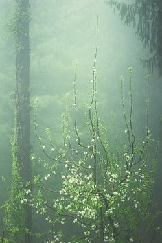 Come into my dream. Apple blossom and fog, by Anna Vesna