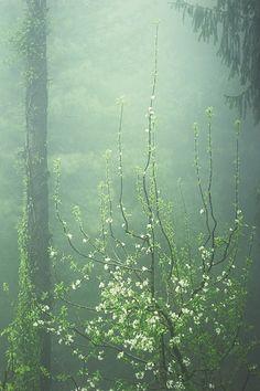 Come into my dream. Apple blossom and fog, by Anna Vesna