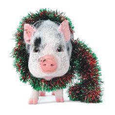christmas pig - Google Search