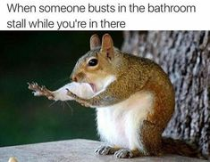 Laugh Out Loud With These Funny Squirrel Memes - I Can Has Cheezburger? Laugh Out Loud With These Funny Squirrel Memes - I Can Has Cheezburger? Memes Humor, Funny Memes, Jokes, Funny Quotes, Diet Humor, Gym Memes, Funniest Memes, Funny Signs, Animal Memes