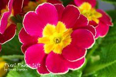 2 x Digital print digital picture flower. Yellow by pixelphotogift