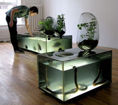 """River Plant Aquarium by Mathieu Lehanneur. A self contained living local river ecosystem for indoors. """"This aquarium is not only an interesting home décor piece, but also a fish hatchery and vegetable. Planted Aquarium, Aquarium Garden, Glass Aquarium, Aquarium Kit, Aquarium Design, Conception Aquarium, Mathieu Lehanneur, Cool Fish Tanks, Snake Tanks"""