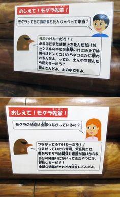 「死ぬわけねーだろ!!」子どもの質問に毒舌をかます多摩動物公園の解説キャラ「モグラ先輩」が笑えるww - IRORIO(イロリオ) Fu Fu Fu, Creepy Cat, Japanese Words, Freak Out, Hilarious, Funny, Good Job, Vows, Comedy